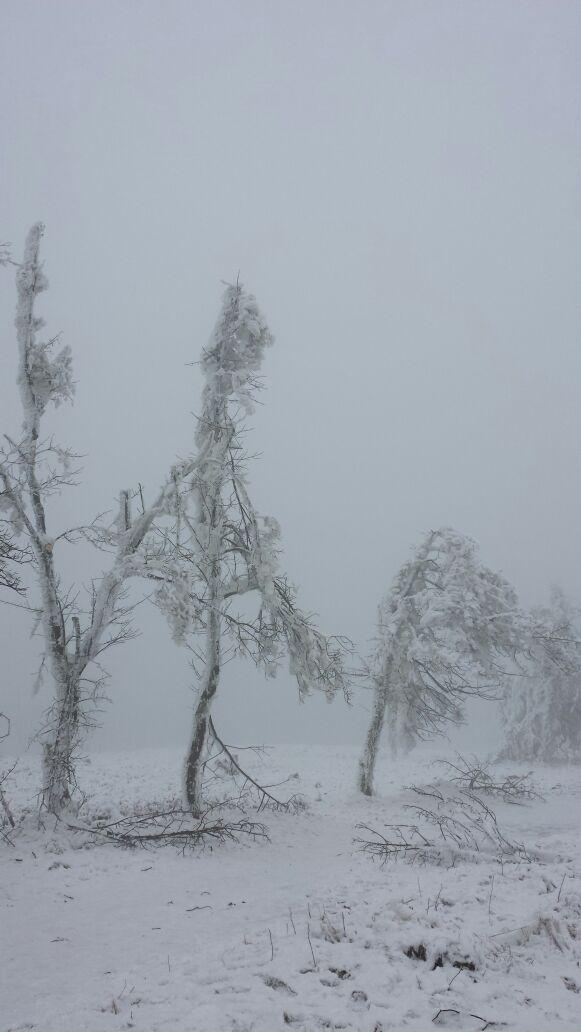 Eisbruch nahe Winterberg, 6. Dezember 2014