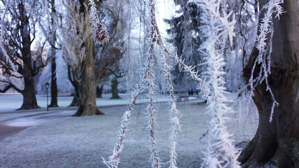 Eisiger Start in den Tag im Gräflichen Park von Bad Driburg