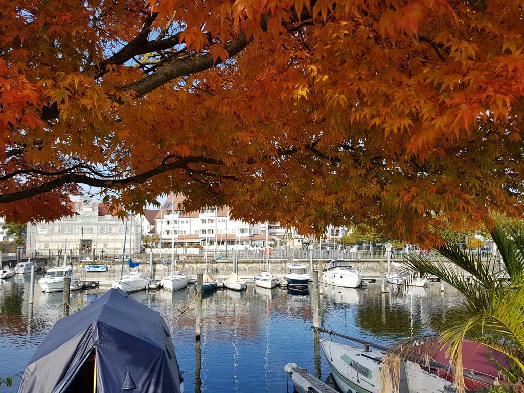 Prachtvolle Herbstfarben mit Blick auf den Hafen von Langenargen, 4. November 2017