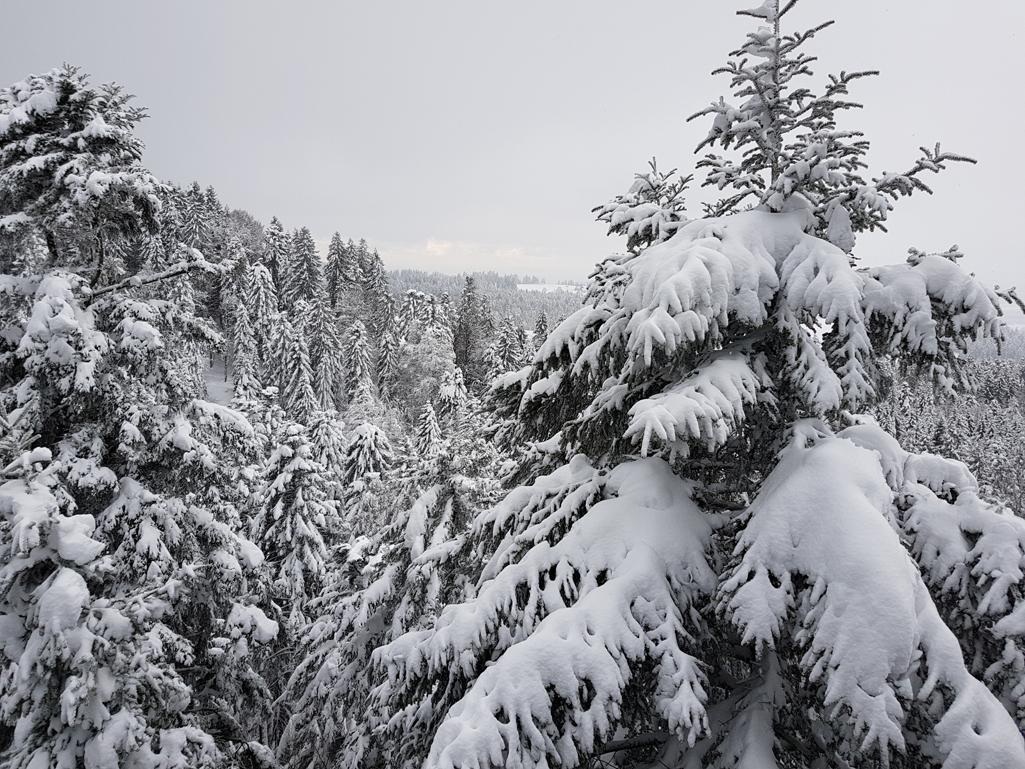 Blick vom Sky-Walk-Scheidegg in den Winterwald, 17. Dezember 2017