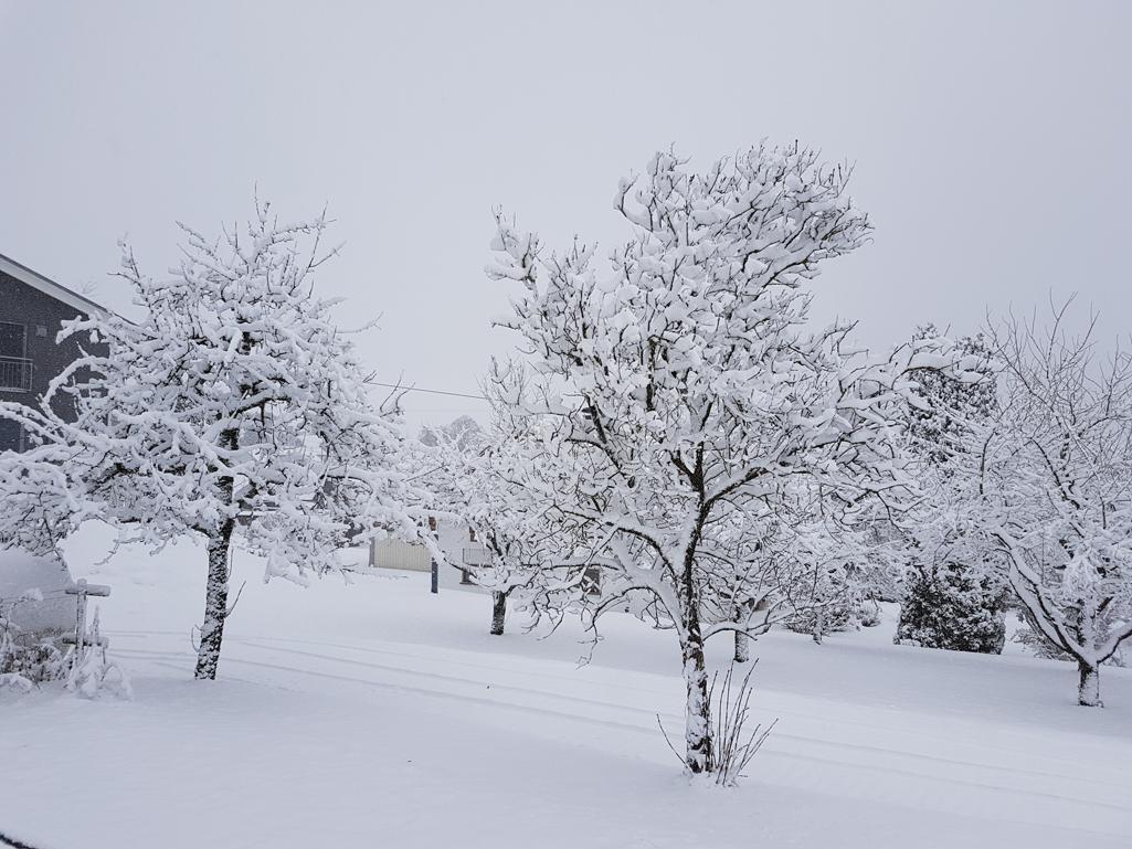 Tiefverschneite Bäume bei Horgenzell, 28. Dezember 2017