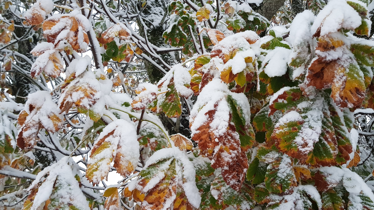 Herbst meets Winter: 28. Oktober 2018