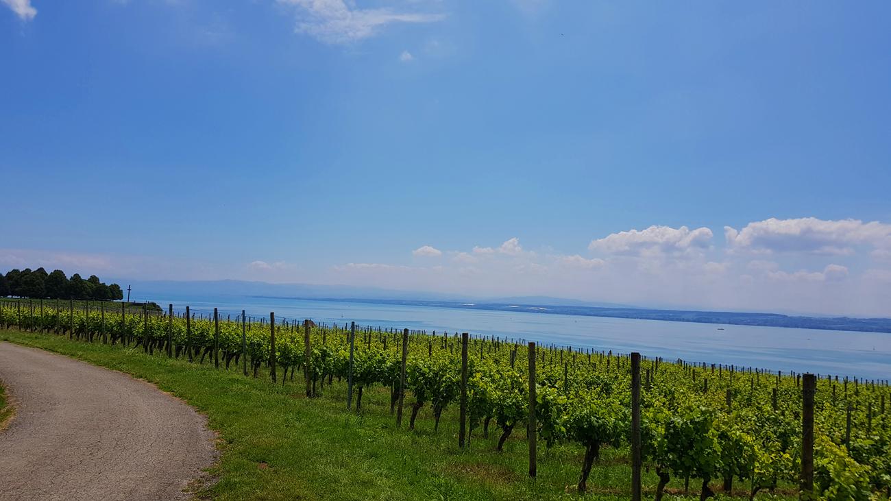 Wein-Welt zwischen Meersburg und Hagnau, 14. Juni 208