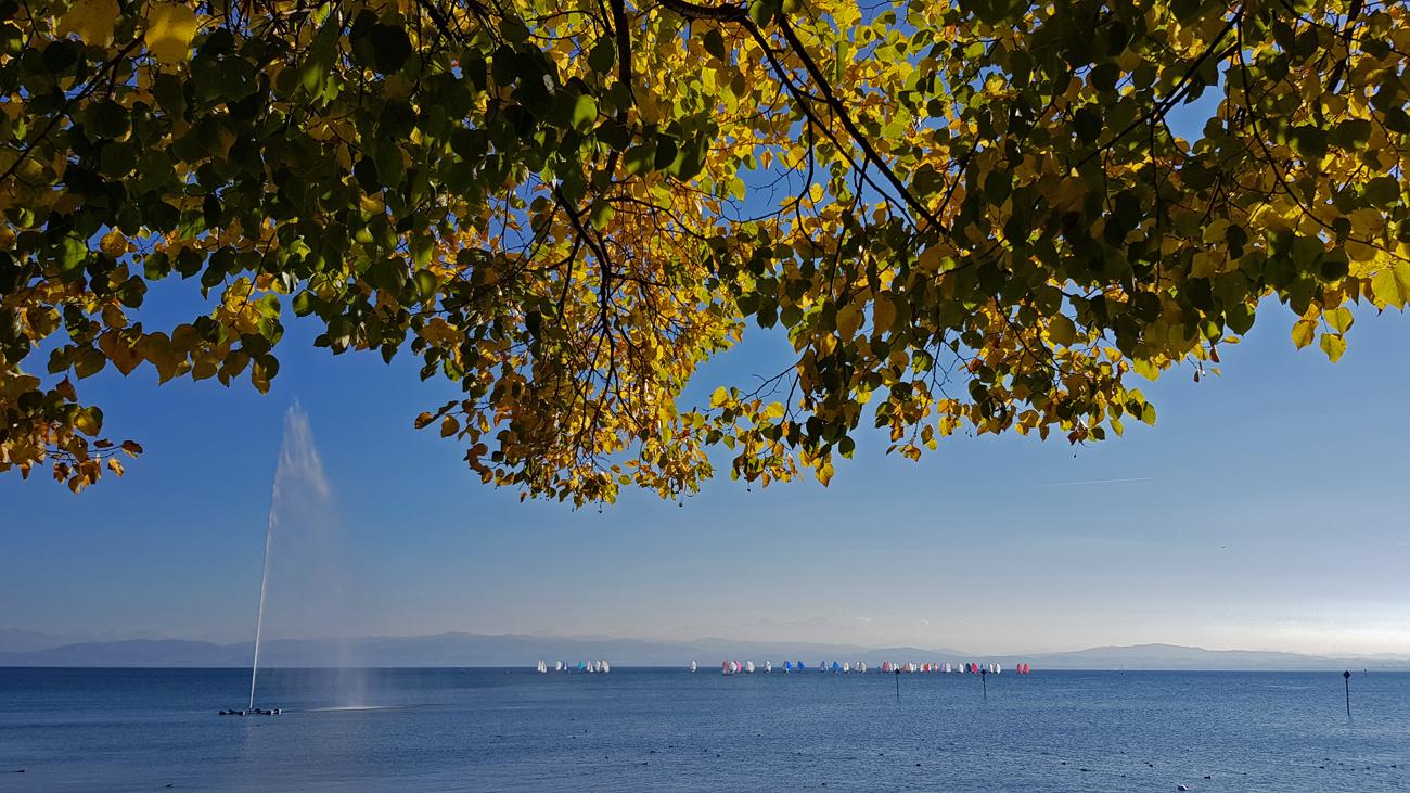Milde Herbstfarben in Friedrichshafen, 4. Oktober 2018