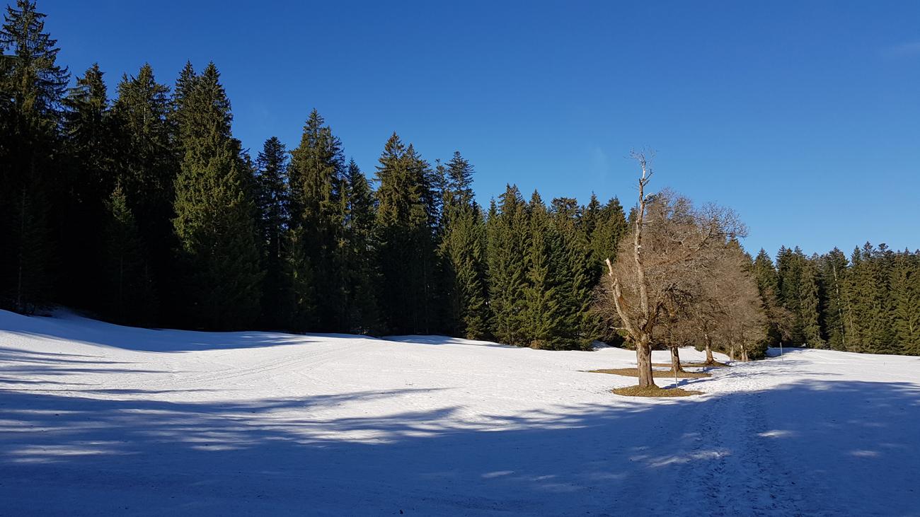 Herrlicher Waldweg mit geschlossener Schneedecke auf 1200 Metern, 18. April 2019