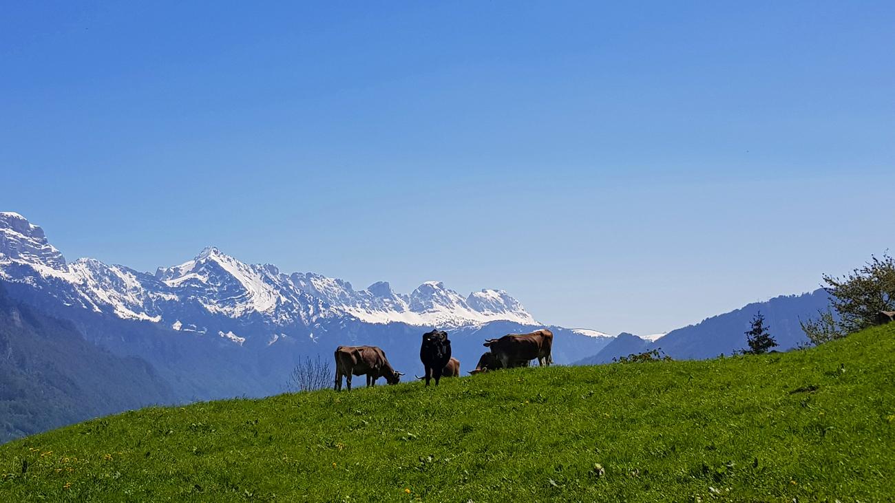 Alpenidylle am Walensee, 1. Mai 2019