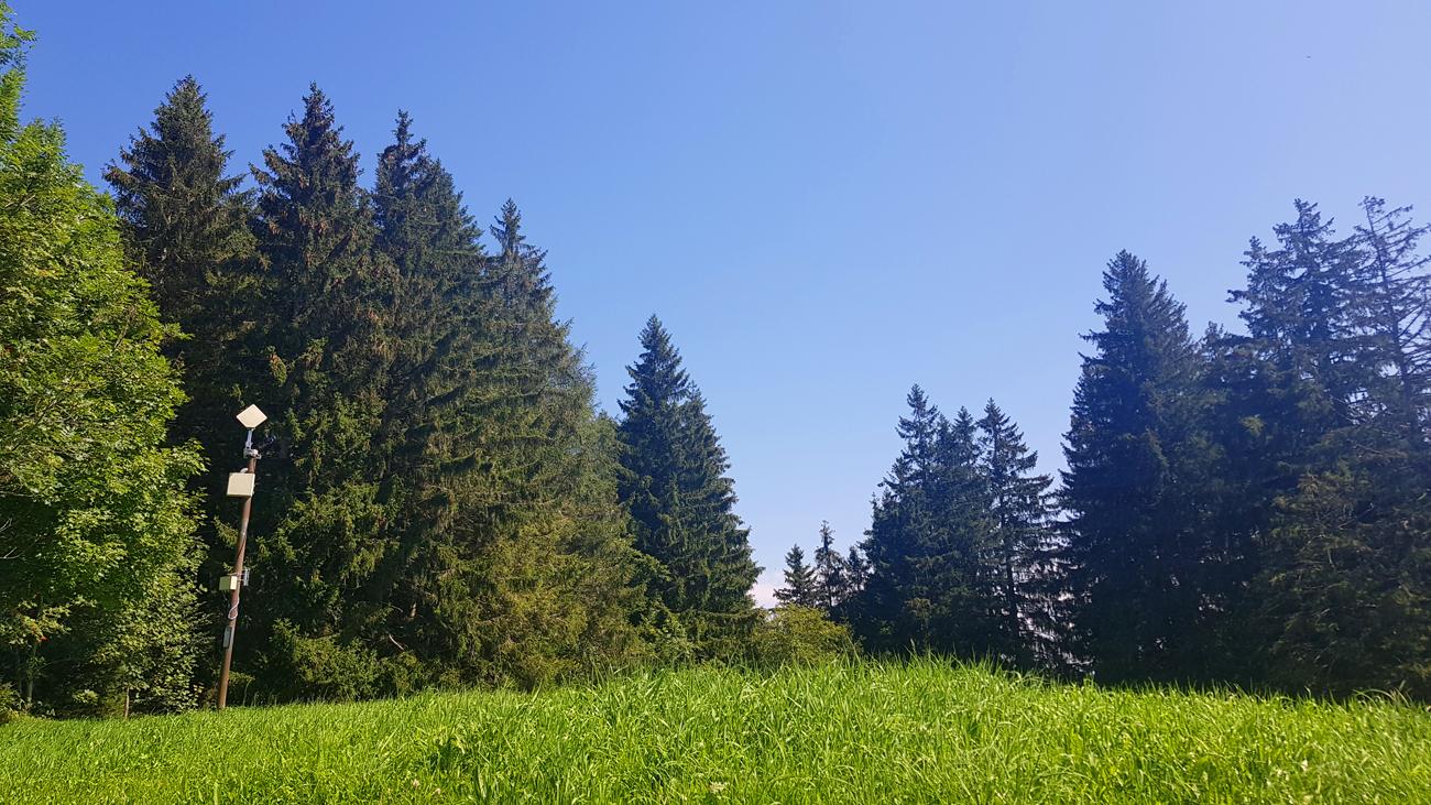 Messwiese hinter der ehemaligen meteomedia AG, 25. August 2019