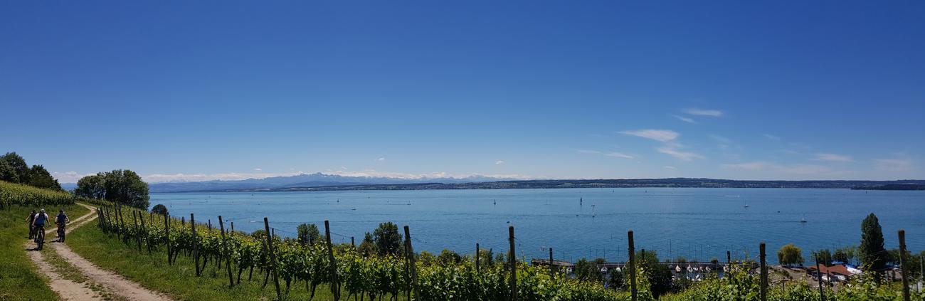 Radfahren zwischen Weinreben und See, 12. Juni 2020